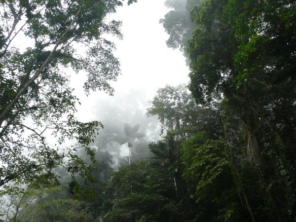 Un bosque nublado es aquel bosque afectado o influenciado por la presencia de nubes o neblinas.