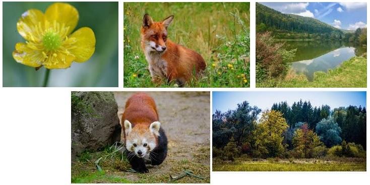 Flora Y Fauna De Alemania