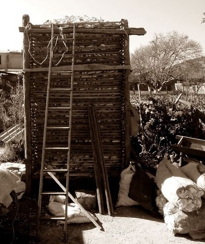 Sincolote de 3 metros de altura