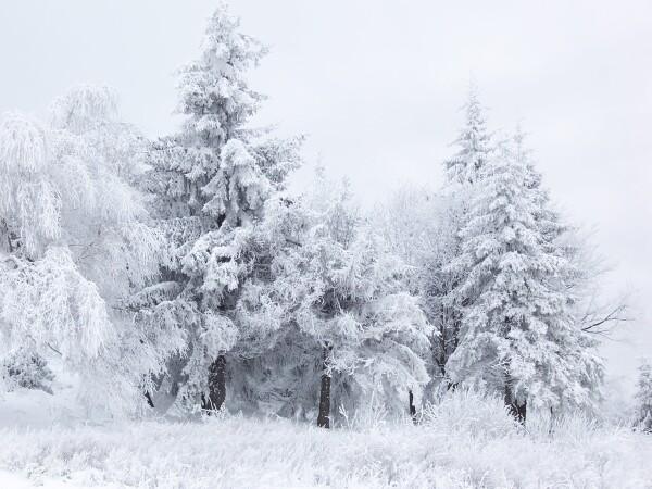 Blanco: del color de la nieve.