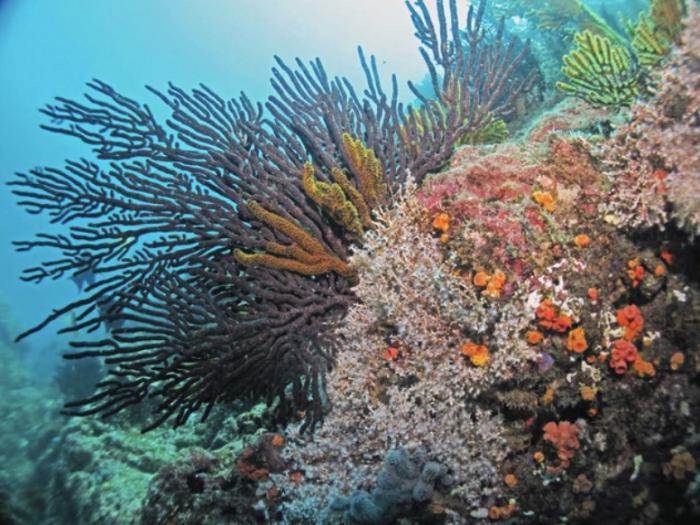 Substrato rocoso con varias especies de Cnidarios