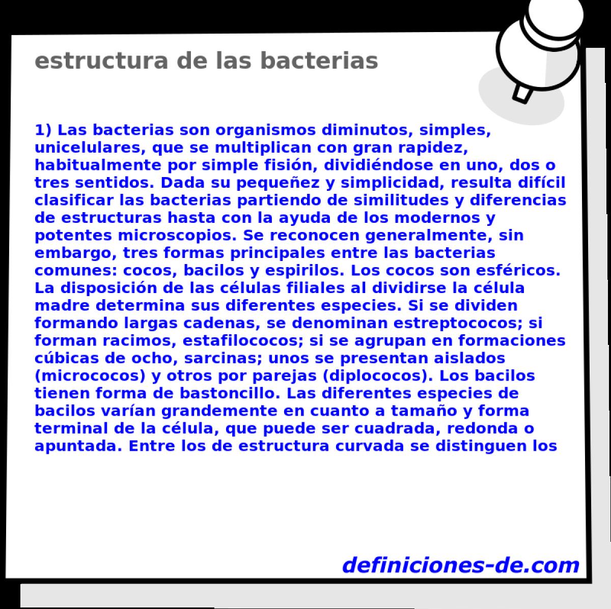 Estructura De Las Bacterias